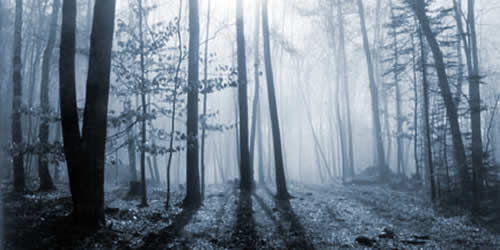 bosque_niebla.jpg