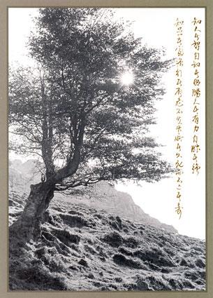 TAO2910.jpg