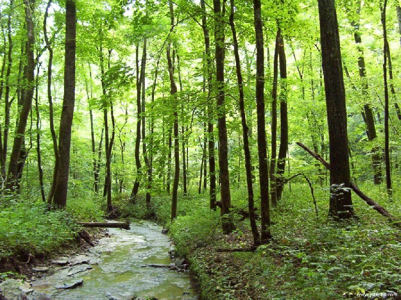 46-Woodland_Stream.jpg