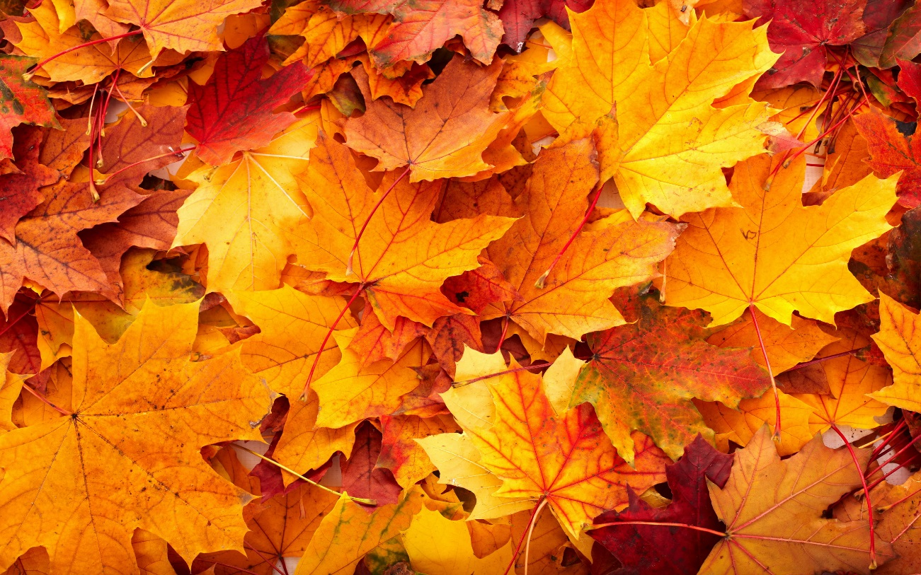 otoño-11.jpg